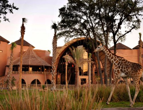Resort Review – Disney's Animal Kingdom Lodge, Jambo House